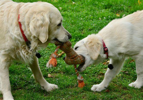 10 אביזרי חובה לכלבים ובעליהם